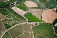 Paesaggio collinare con vigne
