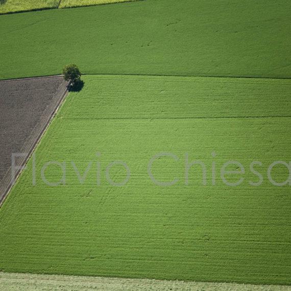 Ripresa-aerea-della-pianura-pavese-campi-di-riso