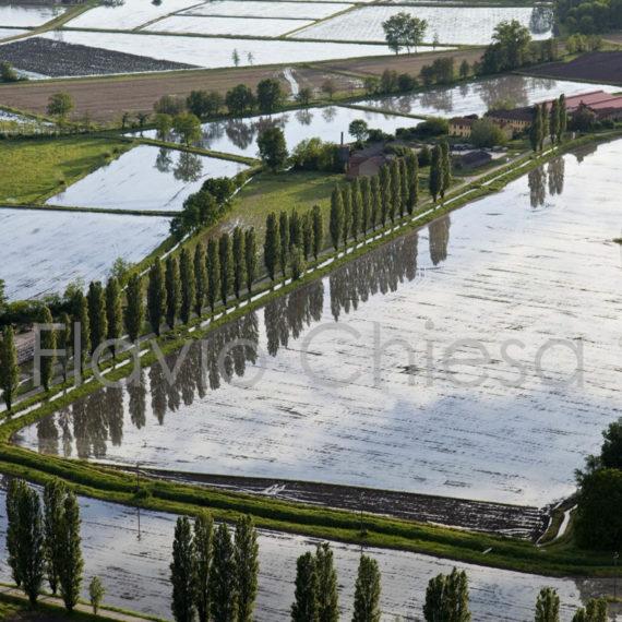 Viale-alberato-circondato-dalle-risaie-in-provincia-di-Pavia