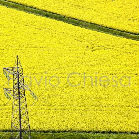 campo-di-colza-nelle-campagne-pavesi